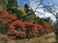 11月16日紅葉狩り